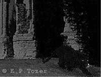 How the beast might look if seen in Chapel Hill graveyard at night, photo © E.P.Tozer